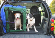 Patty and Selma in October 2007 after a training session with Dr Sands in Astley Park Chorley